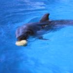 イルカが見たいなら高知県室戸市の室戸ドルフィンセンターがお勧め