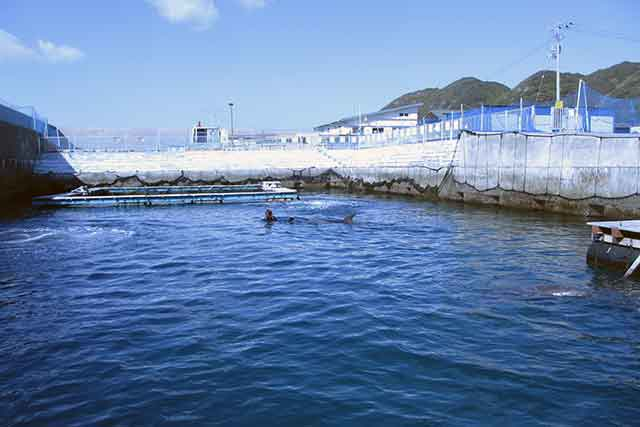 イルカと一緒に泳げる