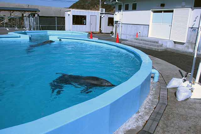 イルカとの距離がありえないほど近い