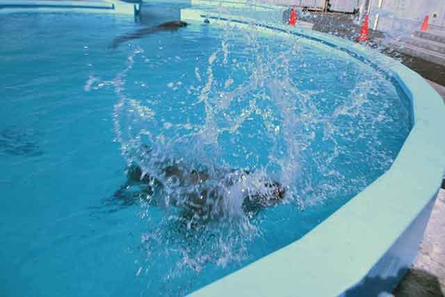 水遊びするイルカ